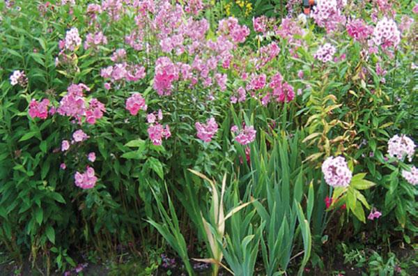natürlich schöne und kräftige pflanzen mit TerraBioPower